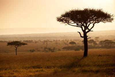 Kenya, Mara North Conservancy. Mara North Landscape at Dawn. by Niels Van Gijn
