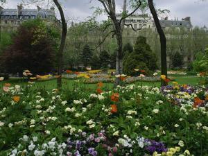 Poppies in Parc De Monceau, Paris, France, Europe by Nigel Francis