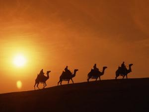Riders Silhouetted on Camels at Sunset, Giza, Cairo, Egypt, North Africa, Africa by Nigel Francis