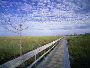 Viewing Walkway, Everglades National Park, Florida, United States of America, North America by Nigel Francis