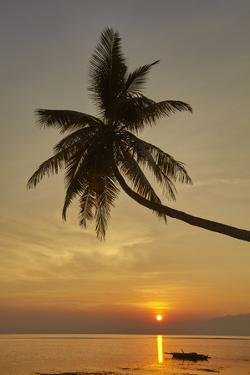 A sunset silhouette of a coconut palm at Paliton beach, Siquijor, Philippines, Southeast Asia, Asia by Nigel Hicks