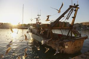 Black-headed Gulls Around a Fishing Boat, Trani, Italy by Nigel Hicks
