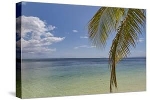 Coconut palm fronds hang down over the shore along the beach at San Juan, Siquijor, Philippines, So by Nigel Hicks