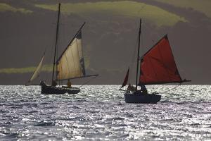Sailing Oyster Dredgers Working the Native Oyster Bed in Carrick Roads Near Falmouth, Cornwall by Nigel Hicks