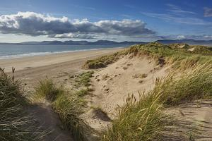 Sand dunes on Rossbeigh beach, Ring of Kerry, County Kerry, Munster, Republic of Ireland, Europe by Nigel Hicks