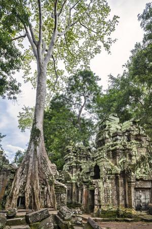 Cambodia, Ta Prohm, Siem Reap Province. the Ruins of the Buddhist Temple of Ta Prohm