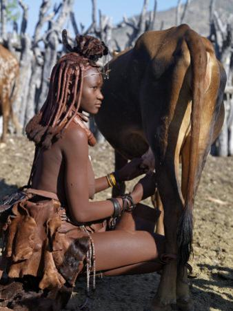 Himba Woman Milks a Cow in the Stock Enclosure Close to Her Home, Namibia