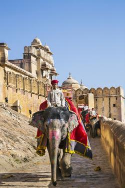 India, Rajasthan, Jaipur by Nigel Pavitt