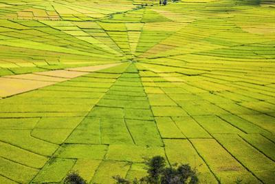 Indonesia, Flores Island, Cancar. the Attractive Spider S Web Rice Paddies Near Ruteng.
