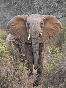 Kenya, Laikipia County by Nigel Pavitt