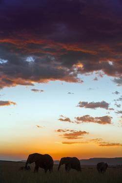 Kenya, Narok County, Masai Mara. Elephants Silhouetted Against a Beautiful Sky at Sunset. by Nigel Pavitt