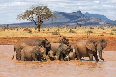 Kenya, Taita-Taveta County