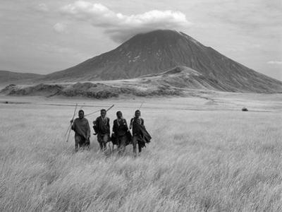 Maasai Warriors Stride across Golden Grass Plains at Foot of Ol Doinyo Lengai, 'Mountain of God'
