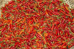 Muang Ngoi, Luang Prabang Province. Red Chillies Spread on a Bamboo Woven Mat to Dry in the Sun. by Nigel Pavitt