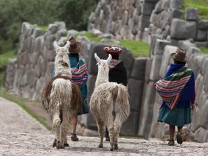 Peru, Native Indian Women Lead their Llamas Past the Ruins of Saqsaywaman by Nigel Pavitt