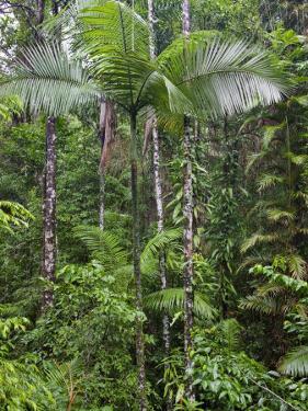Queensland,, the Beautiful and Very Diverse Daintree Rainforest, North Queensland, Australia by Nigel Pavitt