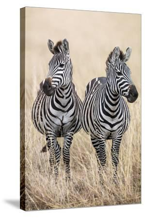 Safari Duet