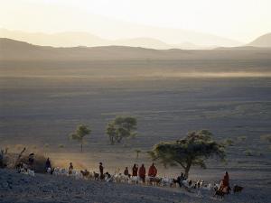 Scene at a Maasai Manyatta, or Homestead, at Dawn in an Arid Part of Northern Tanzania by Nigel Pavitt