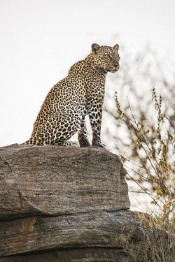 The Look Out by Nigel Pavitt