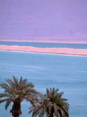 Palms over Dead Sea, Dead Sea, Israel by Nik Wheeler