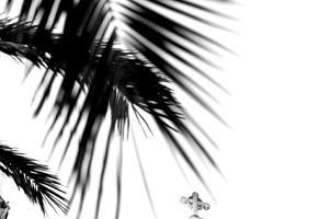 Palm Leaves, Cross, B/W by Nikky