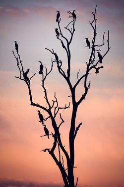 Before the Sunset by Niklas Rosenkilde