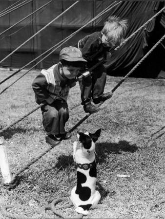 Little Boys Outside Circus Tent Playing with a Dog