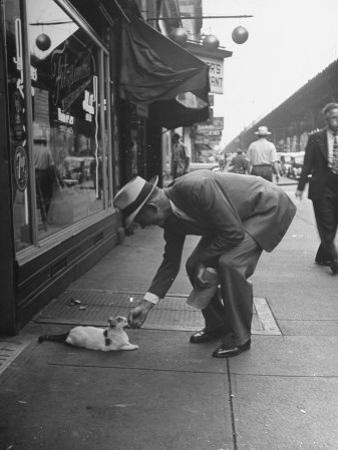 Man Bending over to Touch Cat Sitting on Sidewalk
