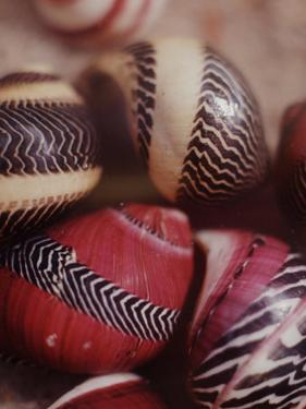 Sea Shells by Nina Leen