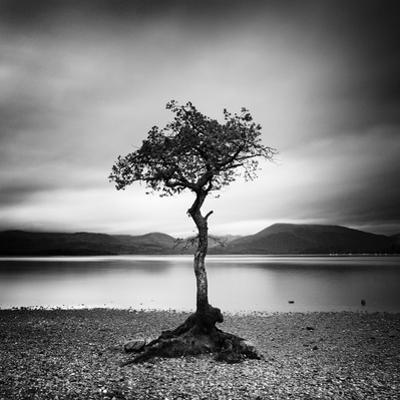 Millarrochy Tree by Nina Papiorek