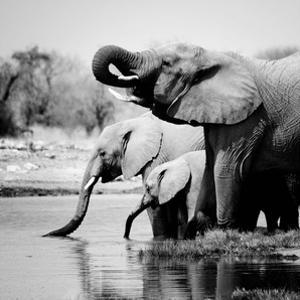 Namibia Elephants by Nina Papiorek