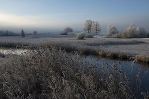 Cold by Nina Pauli