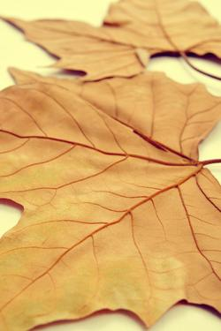 Picture of a Pile of Dried Leaves in Autumn with a Retro Effect by nito