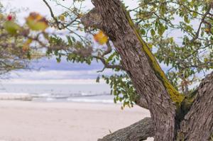 Mossy Beach by NjR Photos