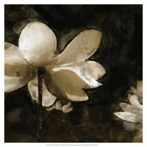 Bronze Lily II by Noah Bay