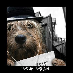 Dog Dylan by Noah Bay