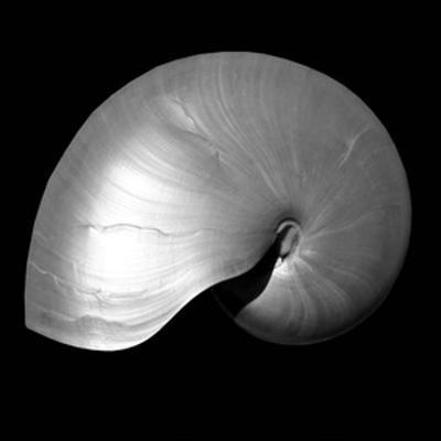Nautilus Twin I by Noah Bay