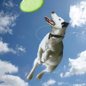 Pup Diva by Noah Bay