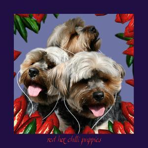 Red Hot Chilli Puppies by Noah Bay