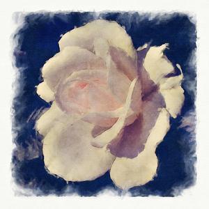 Shimmering Rose by Noah Bay
