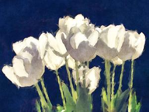 Sunlit Tulips by Noah Bay