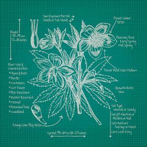 Blueprints 5 by Nobleworks Inc.