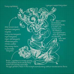 Blueprints 6 by Nobleworks Inc.