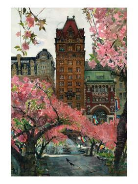 Cherry Blossoms by Noel Miles