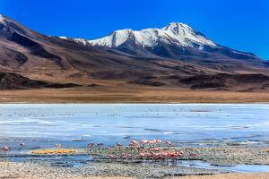 Flamingoes in Laguna Verde ,Bolivia by nok3709001