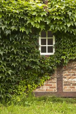Farmhouse, Facade, Ivy Covered, Detail by Nora Frei