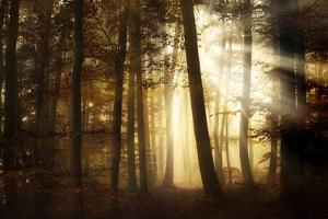 a new day by Norbert Maier