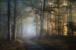 autumn symphony by Norbert Maier