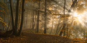 Forest Light by Norbert Maier