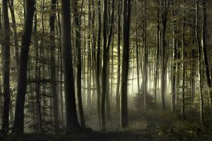 into the unknown by Norbert Maier